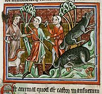Depiction of a beaver hunt from a medieval bestiary showing it biting off its testicles