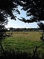 Beech Field - geograph.org.uk - 1427438.jpg