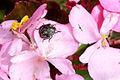 Beetle (5921103180).jpg
