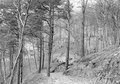 Befestigungen im Wald am Eingang zur Winterhalde - CH-BAR - 3238030.tif