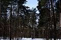 Berlin-Grunewald, Naturfotografie 04, Wald im Schnee, März 2013.jpg