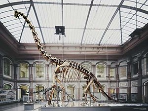 The skeleton of a Giraffatitan in the Berlin N...