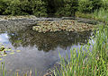 Betts Lane and Common Road junction pond at Nazeing, Essex, England 01.JPG
