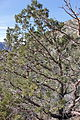 Big Bend National Park, Texas 231.JPG