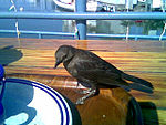 Sharing lunch with a very nice bird