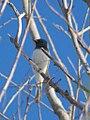 Bird (14308458520).jpg