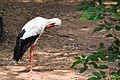 Bird in Arignar Anna Zoological Park.jpg