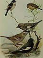 Bird lore (1914) (14569065770).jpg