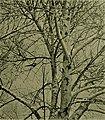 Bird lore (1916) (14752266341).jpg