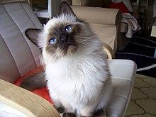 Blue Cross Cat Rescue Carlisle