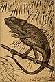 Blätter für Aquarien- und Terrarien-Kunde (1902) (20199819869).jpg