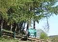 Blaenclydach Llwynypia Forest.jpg
