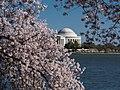 Blossomed Memorial (156453719).jpeg