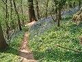 Bluebells in Lower Brienton woods - geograph.org.uk - 454349.jpg