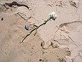 Bluebottle and Carnation... (5074313255).jpg