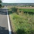 Bockenheim - panoramio.jpg