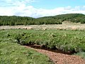Bog and forest - geograph.org.uk - 1315012.jpg