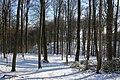 Bois du Pottelberg - Pottelbergbos 20.jpg