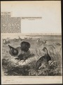 Bonasa cupido - 1862 - Print - Iconographia Zoologica - Special Collections University of Amsterdam - UBA01 IZ17100371.tif