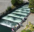 Bonneville Dam fish ladder 2006.jpg