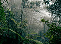 Borneo rainforest.jpg