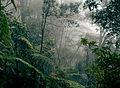 Borneo rainforest.jpg
