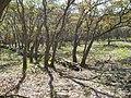 Bosquecillo y vallas antierosivas - panoramio.jpg