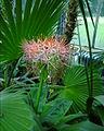 Botanic8.jpg