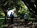 Botanic Gardens Scene - Sydney - Australia (11215686056).jpg