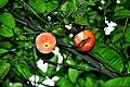 Botanic garden limbe48.jpg