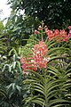 Botanical Garden Singapore 2017 (25383407918).jpg