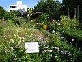 Botanischer Garten der Universität Würzburg - IMG 6818.JPG