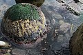 Bowling Ball Concretion at Schooner Gulch State Beach California.jpg