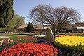 Bowral Tulip Festival - panoramio (2).jpg
