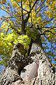 Brühlallee in Schwarzenau - Baum frisst Schild.jpg