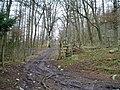 Bridleway - geograph.org.uk - 317029.jpg