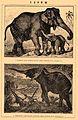 Brockhaus and Efron Encyclopedic Dictionary b59 432-0.jpg