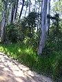 Bromélia em eucalipto 2.jpg