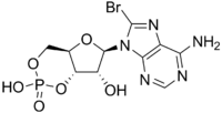 Bromoadenosine cyclic monophosphate.png