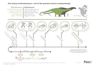 Brontosaurus - Infographic explaining the history of Brontosaurus and Apatosaurus according to Tschopp et al. 2015