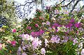 Brookgreen Gardens45.jpg