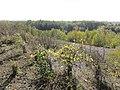 Bruay-la-Buissière - Terril n° 6, Bois de Lapugnoy (12).JPG