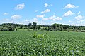 Bucolic Vista on Gensley Road, Lodi Township, Michigan.JPG