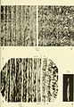 Bulletin (1967) (20421133945).jpg