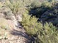 Butcher Jones Trail - Mt. Pinter Loop Trail, Saguaro Lake - panoramio (77).jpg