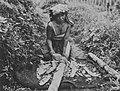 COLLECTIE TROPENMUSEUM Een arbeidster op de kina- en theeplantage Sedep in Priangan oogst de bast van een kinaboom TMnr 60044278.jpg