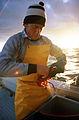 CSIRO ScienceImage 199 Measuring Western Rock Lobster Catch.jpg