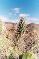 Cactus en Foco.jpg
