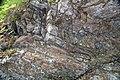 Cades Sandstone (Neoproterozoic; Laurel Creek Road roadcut, Great Smoky Mountains, Tennessee, USA) 3 (36249667173).jpg
