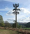 Camouflaged telephone mast on the Dunira Estate, Perthshire - geograph.org.uk - 1582659.jpg